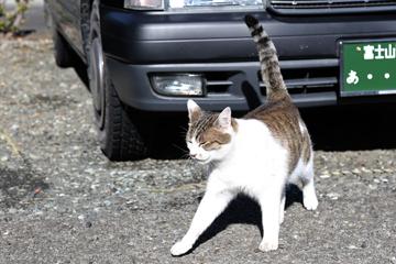 せんこうじでのネコ