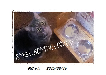 長にゃん20150816