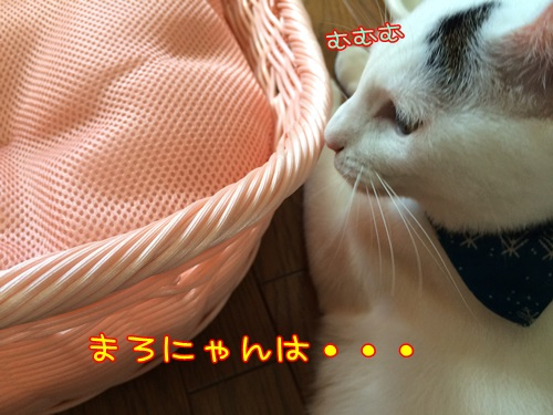 IMG_3166.jpg