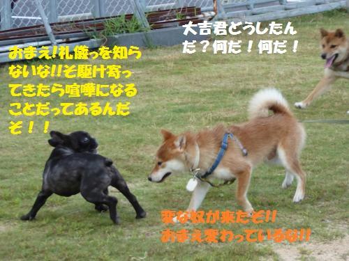 P1000261_convert_20150812140940.jpg