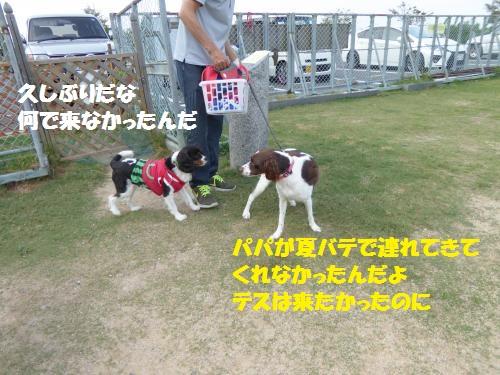 P1000295_convert_20150816091304.jpg