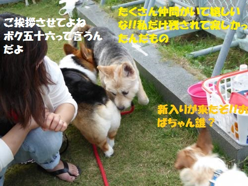 P1000301_convert_20150816091511.jpg