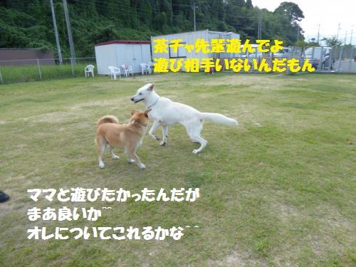 P1000321_convert_20150817095801.jpg