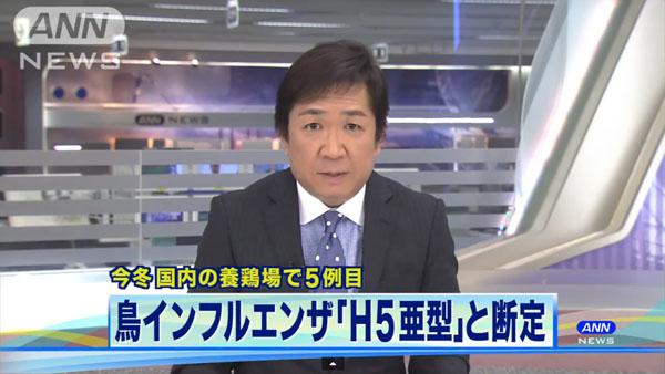 0049_Saga_tori_influenza_201501_01.jpg