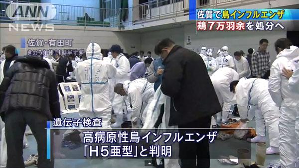 0049_Saga_tori_influenza_201501_03.jpg