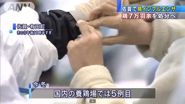 0049_Saga_tori_influenza_201501_04.jpg
