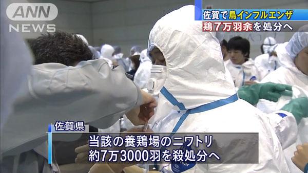 0049_Saga_tori_influenza_201501_05.jpg