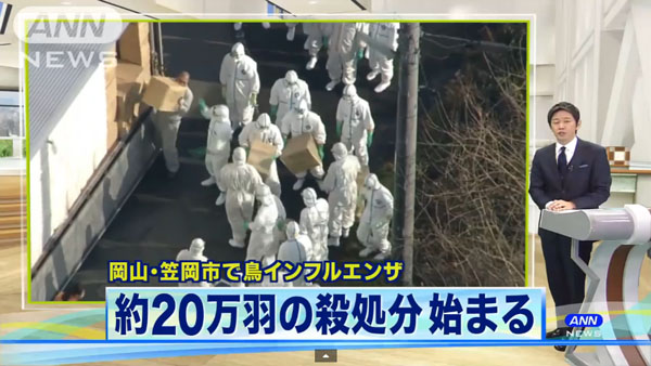 0050_Okayama_tori_influenza_201501_01.jpg