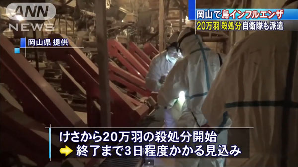 0050_Okayama_tori_influenza_201501_02.jpg