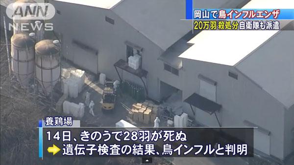 0050_Okayama_tori_influenza_201501_03.jpg