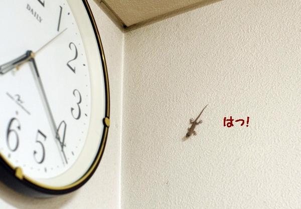 yamori151.jpg