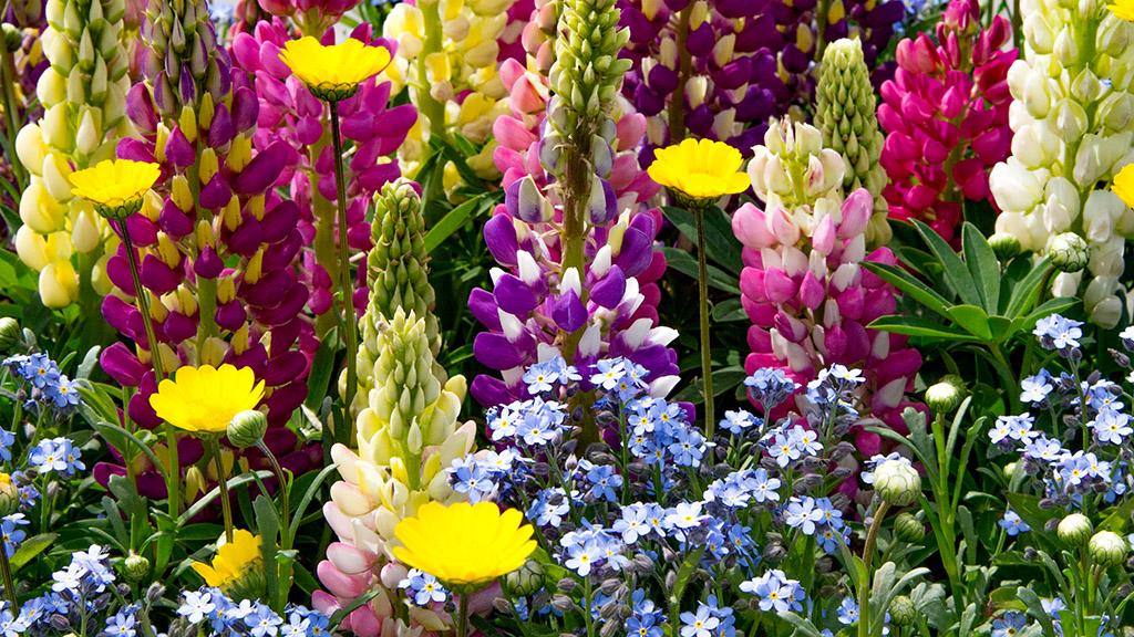 春は花(アメリカンウォーターフロント)