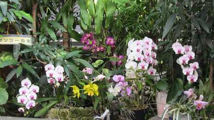 花の湯 5 らんの花