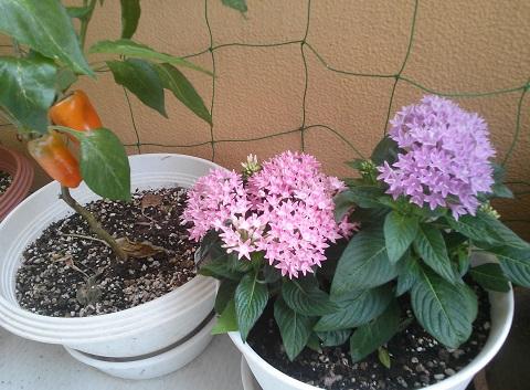 gardening515_20150811101332a81.jpg