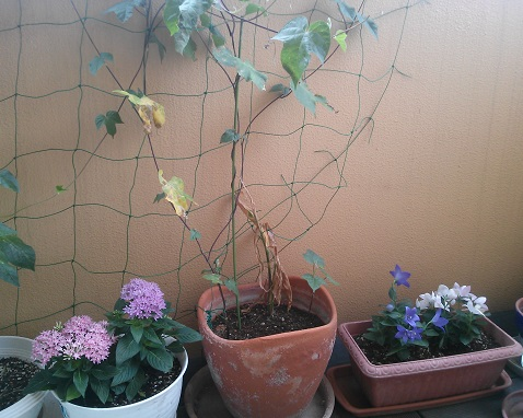 gardening516_20150811101334a3b.jpg