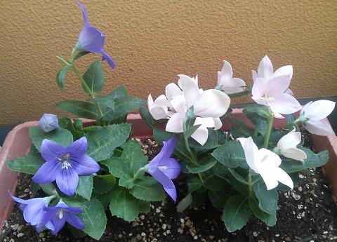 gardening517_201508111013358ed.jpg