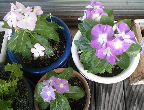 gardening519_20150811101404bfa.jpg