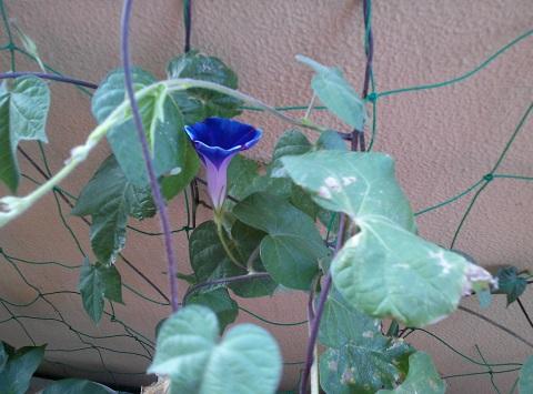 gardening520_20150811101405a10.jpg