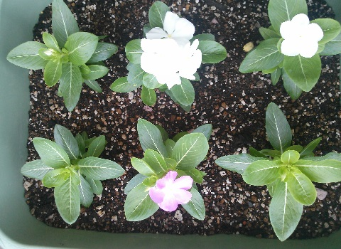 gardening525.jpg