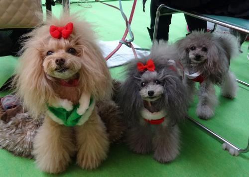 年末恒例クリスマスパーティ