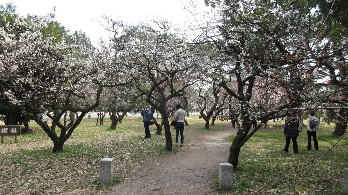1603京都2d1-32-IMG_0042
