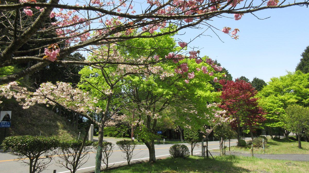 1605比叡山-40-IMG_0309
