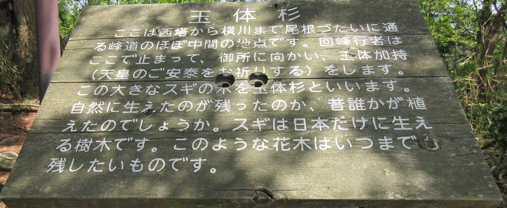 1605比叡山-35-IMG_0298玉体杉説明