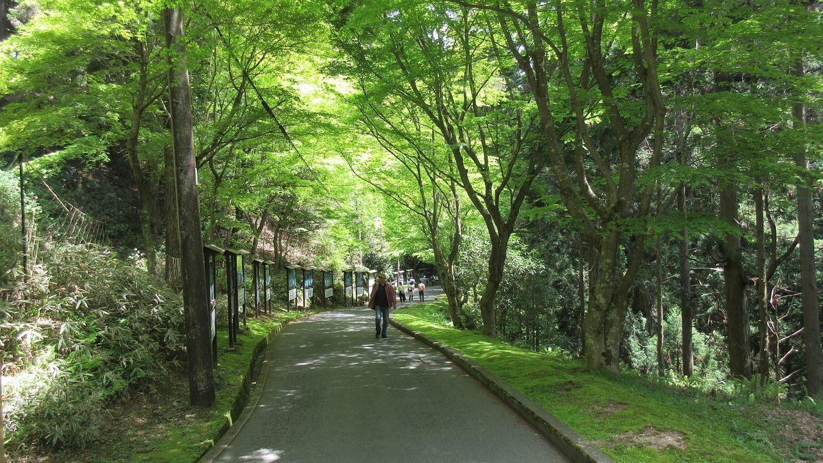 1605比叡山-25-IMG_0283