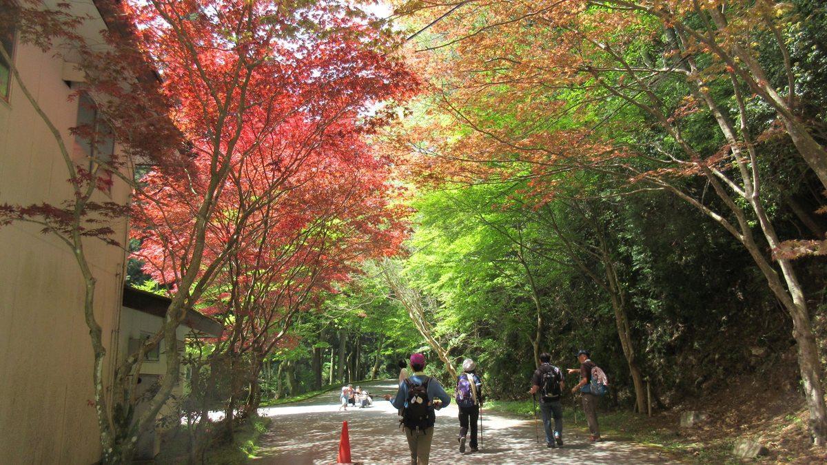 1605比叡山-23-IMG_0277