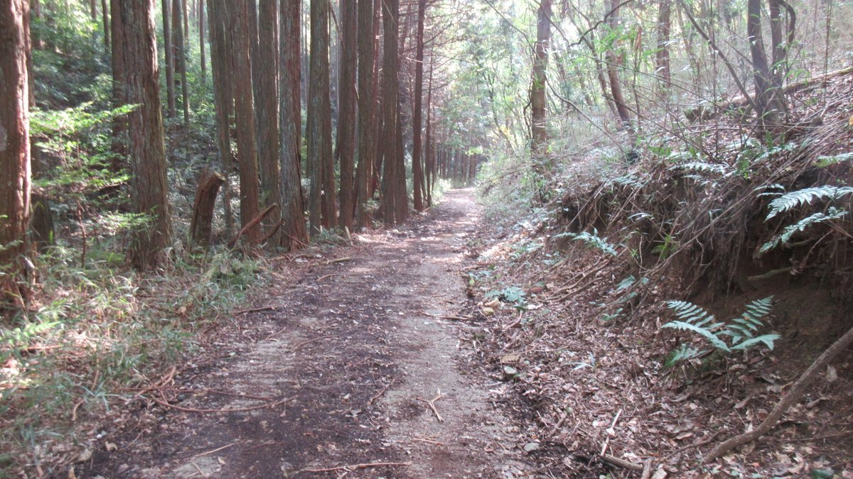 1611桜井-36-IMG_0976