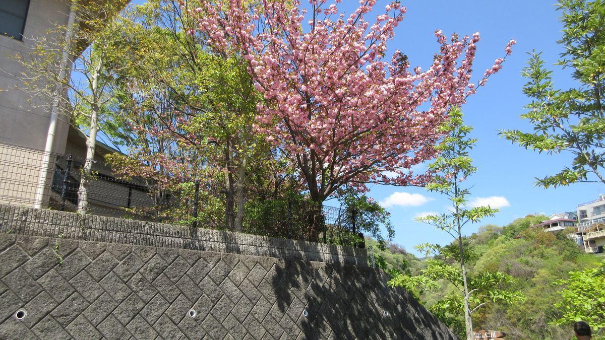 1704-10-甲山-IMG_0023