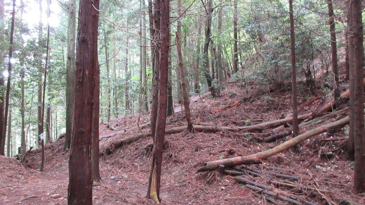 1705-06-愛宕山-IMG_0331