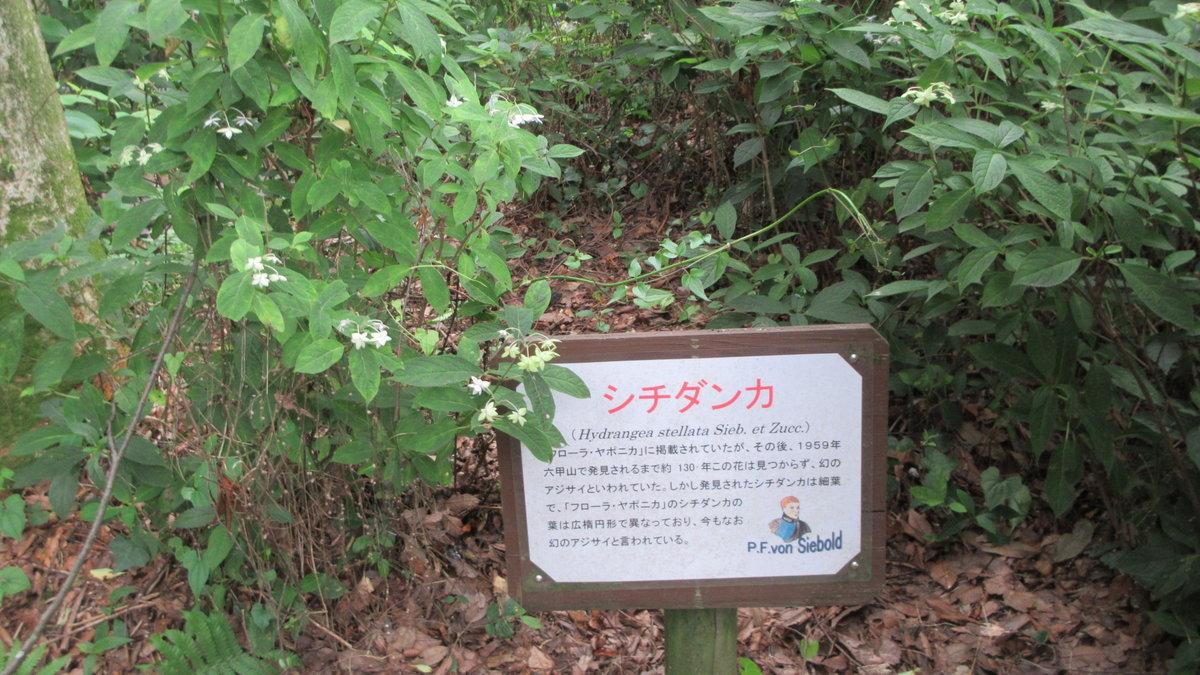 1707-20-生駒-IMG_0888