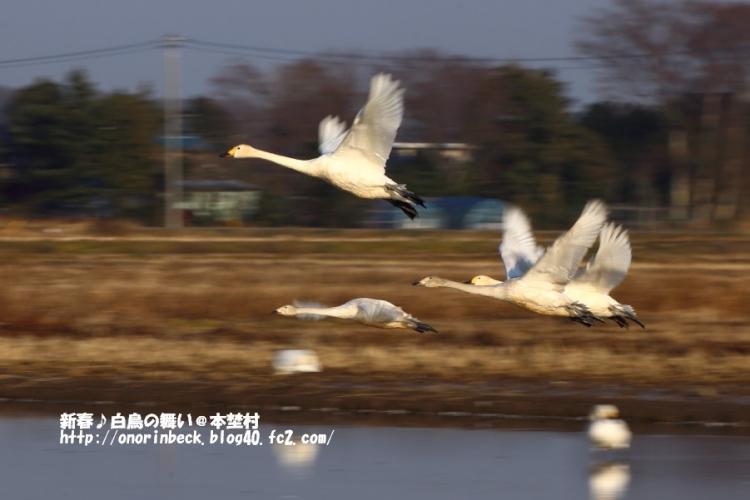 EOS6D_2014_12_30_9999_351.jpg