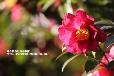 EOS6D_2015_01_11_9999_115.jpg
