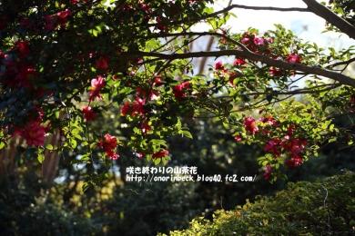 EOS6D_2015_01_11_9999_132.jpg