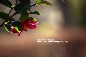 EOS6D_2015_01_11_9999_135.jpg