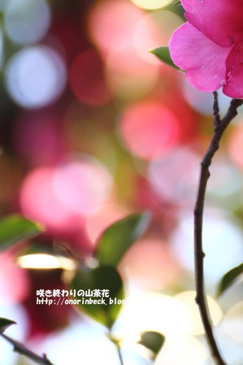 EOS6D_2015_01_11_9999_144.jpg