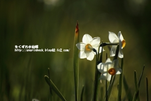 EOS6D_2015_01_12_9999_95.jpg
