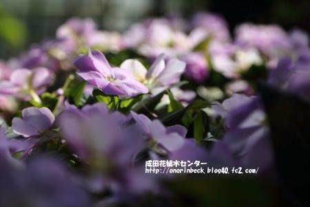 EOS6D_2015_01_18_9999_24.jpg