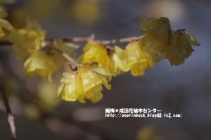 EOS6D_2015_01_18_9999_77.jpg