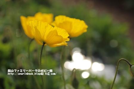 EOS6D_2015_01_25_9999_102.jpg