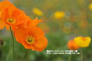 EOS6D_2015_01_25_9999_182.jpg