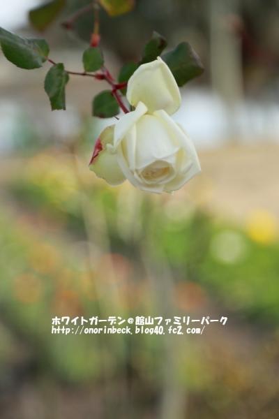 EOS6D_2015_01_25_9999_37.jpg