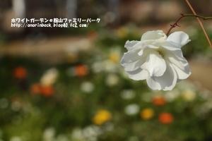 EOS6D_2015_01_25_9999_43.jpg