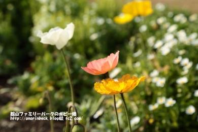 EOS6D_2015_01_25_9999_50.jpg