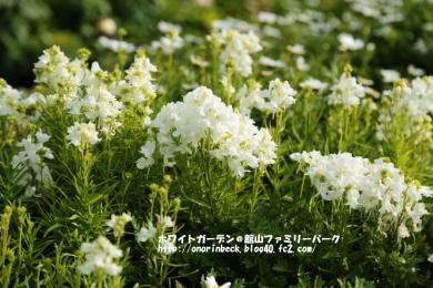 EOS6D_2015_01_25_9999_55.jpg