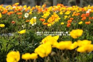 EOS6D_2015_01_25_9999_91.jpg