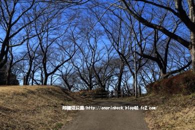 EOS6D_2015_01_31_9999_208.jpg