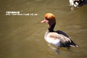 EOS6D_2015_02_01_9999_273.jpg